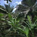 Vegetación bosque