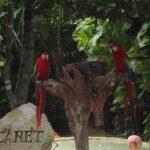 Entrada en el Parque de Xcaret con dos loros multicolor